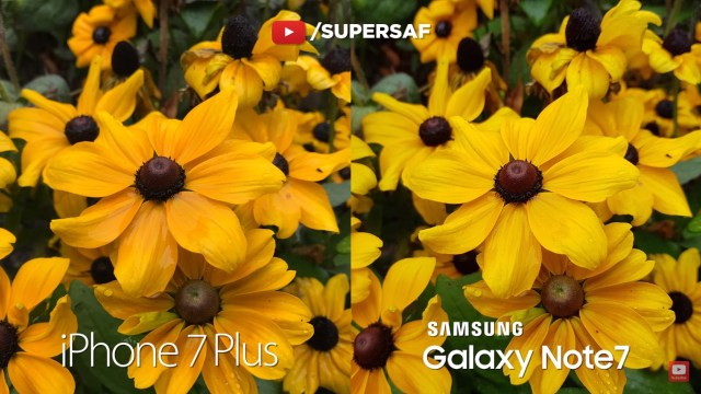 iphone-7-plus-vs-galaxy-note-7-sample-3