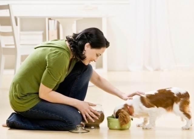 richmond-pet-sitter-feeding-dog-640x461