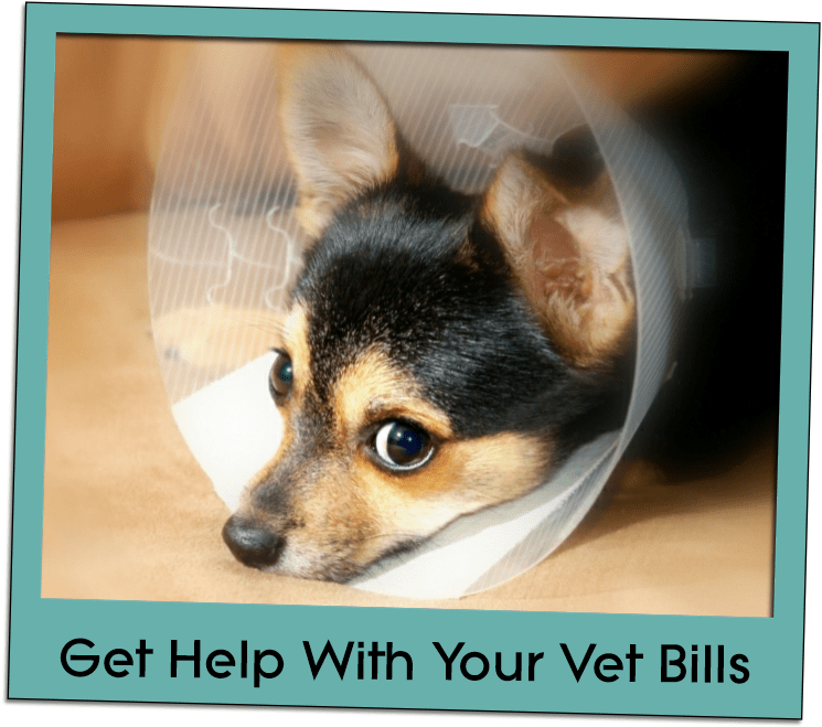 vet bills grid