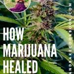 How Marijuana Healed Me