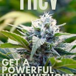 THCV: Get a Powerful High without the Munchies