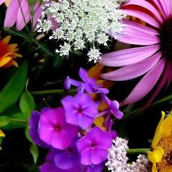 Bouquet Flowers Hd Wallpaper Wallpaper Flowers Wallpaper Better