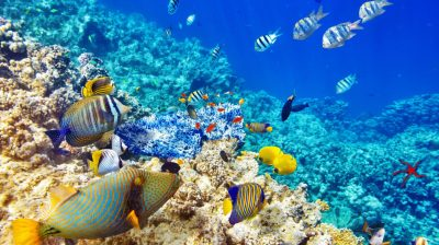 Wallpaper Hd Quality Underwater World Ocean Coral Reef Tropical Fishes : Wallpapers13.com