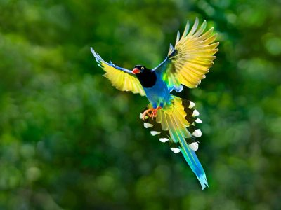 Colorful Toucan Bird Flying Spread Wings Tail Hd Desktop Backgrounds Free Download ...