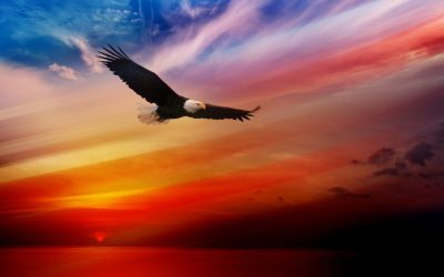 Bald Eagle Flying At Sunset Red Sky Desktop Hd Wallpaper For Tablet And Pc 1920x1200 ...