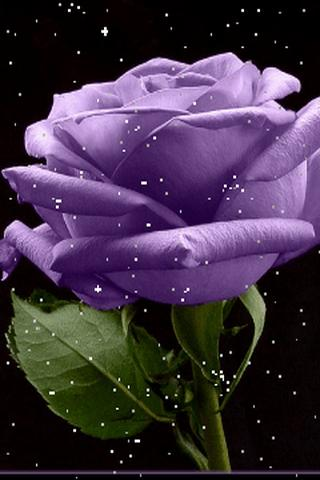 Download Live Flower Wallpaper Gallery
