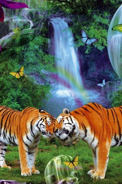 Download Live Animal Wallpapers Gallery