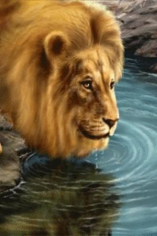 Download Live Lion Wallpaper Gallery