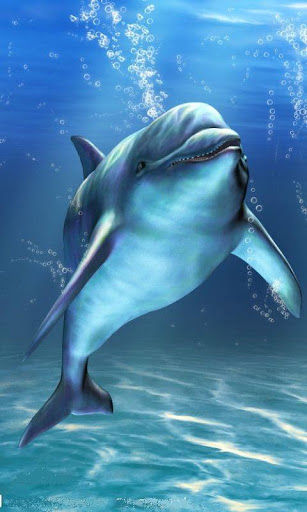 Download Live Wallpaper Dolphins Gallery
