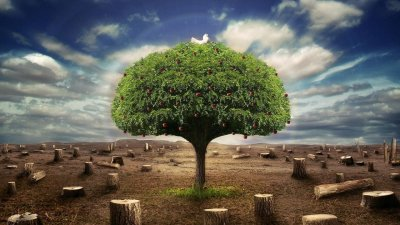 Download Save Tree Wallpaper Gallery