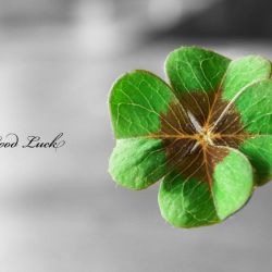 Flowers Text Typography Shamrock Luck Macro Selective Coloring Four