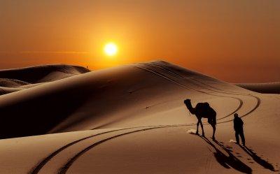 Sun people desert camel wallpaper | 8014x5000 | 559825 | WallpaperUP