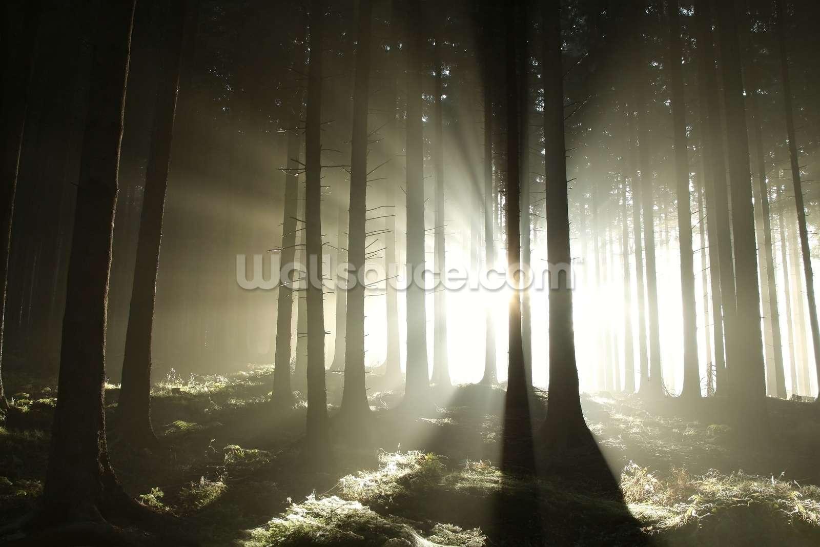 Fullsize Of Dark Forest Wallpaper
