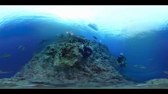360° Video – Take an amaizing swim with sharks swiming around you – Diving new video technology