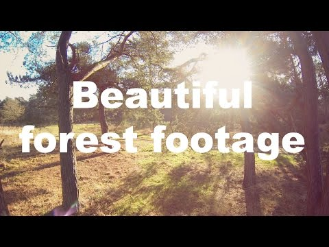 Beautiful forest footage | DJI Phantom | Gopro | Tarot gimbal