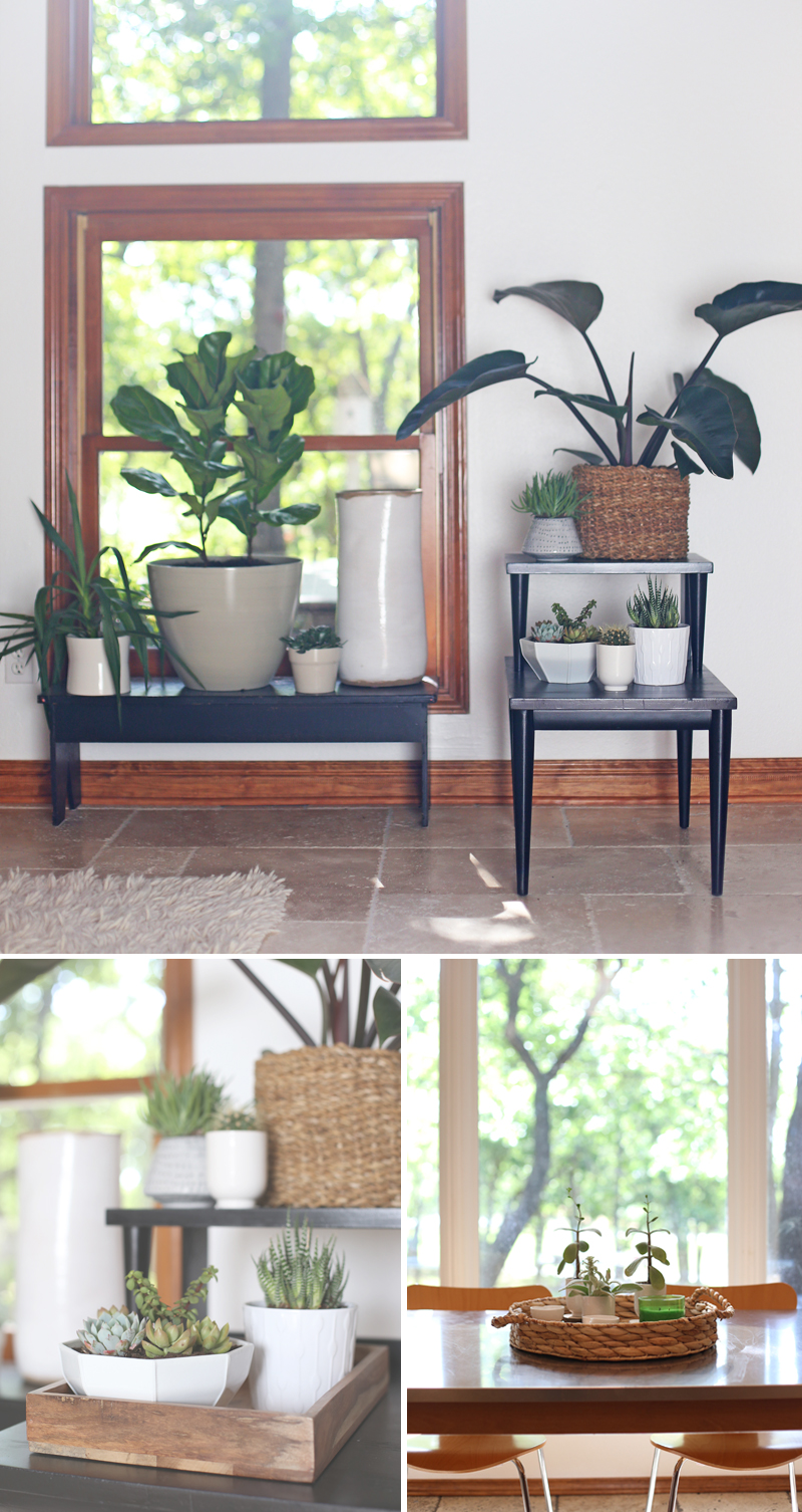 Decorating with succulents: Trends to try this spring