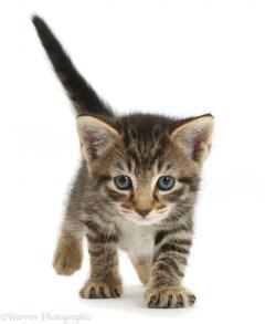 Small Of 5 Week Old Kitten