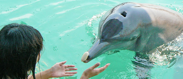 Lumba Lumba Di Serangan Bali