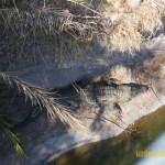 Wild-Africa-Trek-wdwradio-796