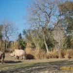 Wild-Africa-Trek-wdwradio-899