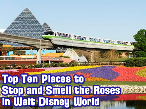 Top-Ten-Places-to-Stop-and-Smell-the-Roses-in-Walt-Disney-World