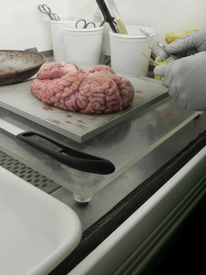 0a-fresh-brain-brain-lab.jpg