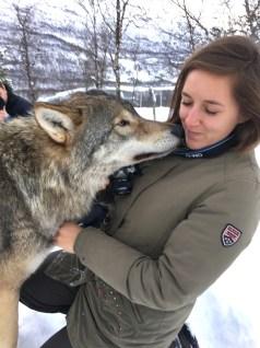Noorwegen wolven kus