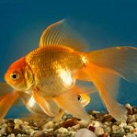 aquarium fish with name - fish names   Aquarium Fish Names Fish that you might see 2016   Fish