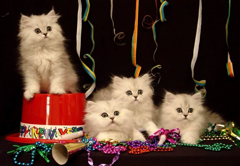 >Happy New Year: Kitten Edition