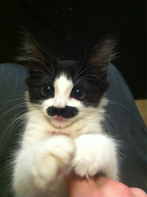 Breaking Off-Topic News: Kitten has Groucho Marx mustache, is adorable