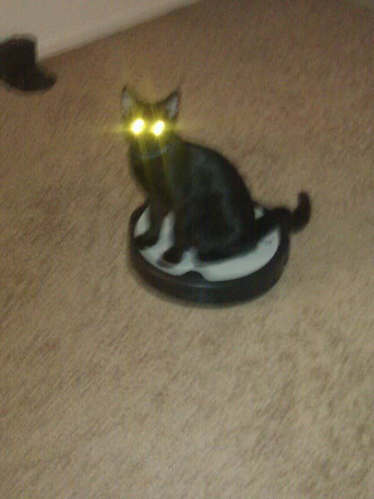 All Women Are Whores, Part XIV: Cat on a Roomba Edition