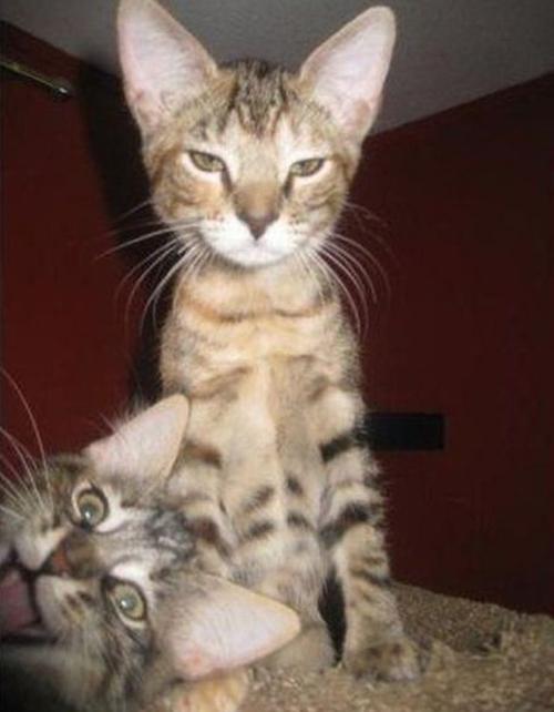 Argumentum ad Kittypicturem: A Rebuttal