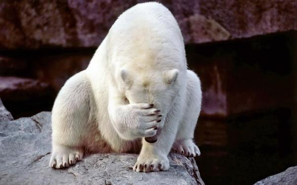 Facepalm-Bear-900x1440