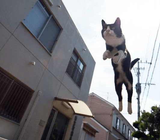 Open Thread for Personal Stuff: March 2014 Flying Cat Edition