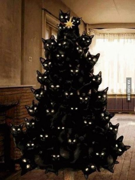 Open Thread for Personal Stuff, December 2014 Cat Tree Edition