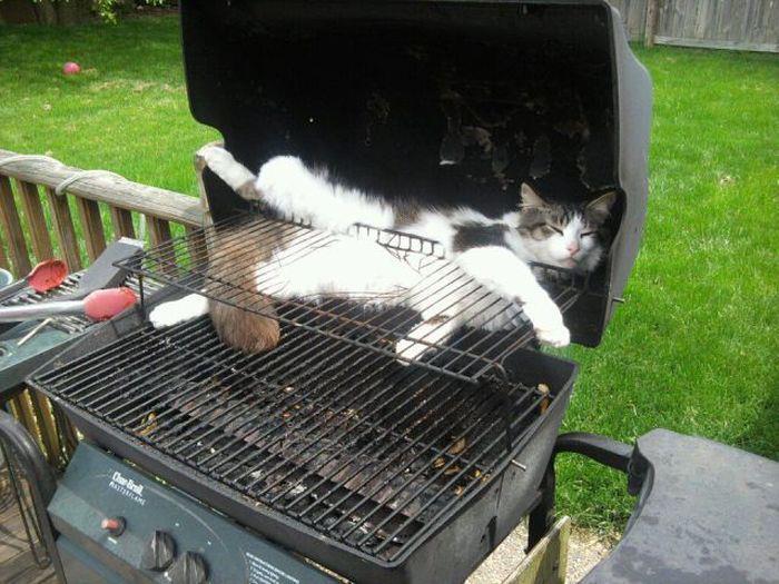 July 4th Cat BBQ Open Thread