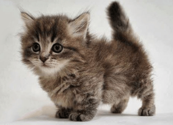 Why I won't pet cute kittens any more :: We Hunted The Mammoth