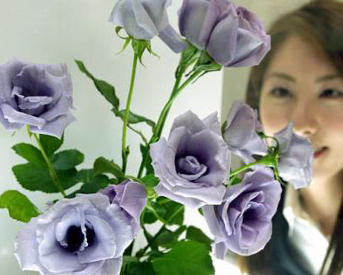 purple_rose.jpg