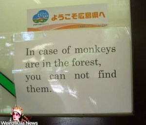 incase-monkeys-forest