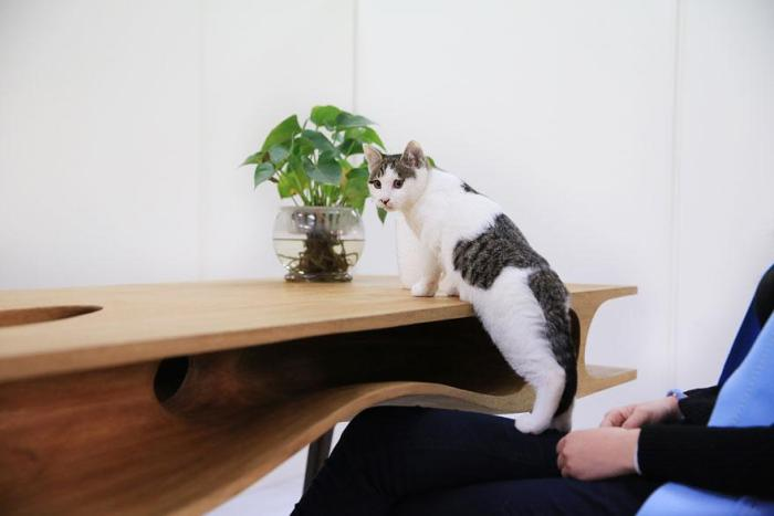 Cat stepping onto catable desk