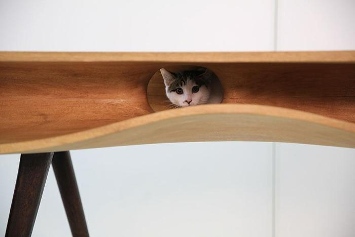 Cat looking out from Catable Desk