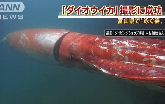 13-Foot-Long Giant Squid Surprises Sailors