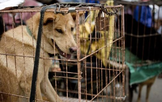 Controversial Dog Meat Festival Ends