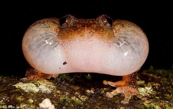 Researchers Discover New Sexual Position In Frogs