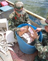 iphone fish smuggling china