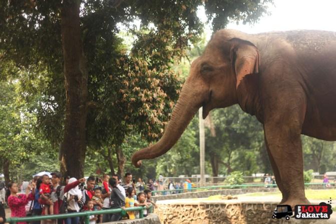 tasha may_welovejakarta_we love jakarta_Ragunan Zoo_Weekend in Jakarta_animals in Jakarta_what to do on the weekend in jakarta