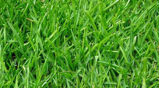 Die sexuelle Verwendung von Rasen zum Frauen befriedigen