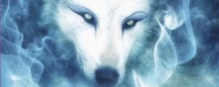 wolf header
