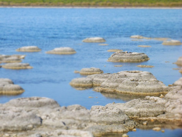 Strombolites and Thrombolites at Lake Thetis