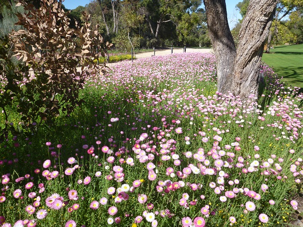 Top spots for flower lovers in Western Australia